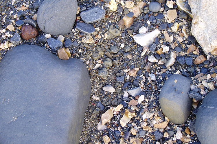 Lyme Regis Fossil Hunting