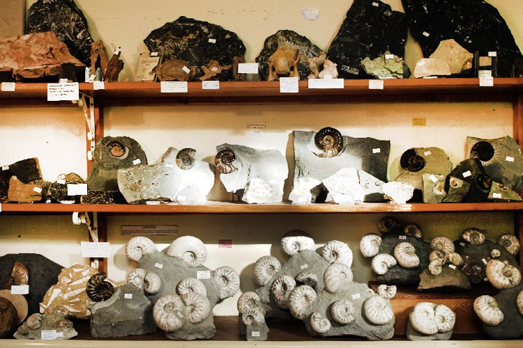 Fossils for sale in the Dinosaurland Fossil Museum Shop